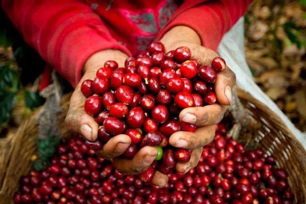El Salvador Coffee Beans 500g 1