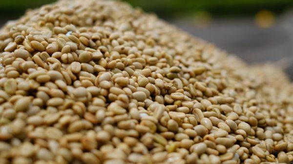 Honduras Coffee Beans 500g 3