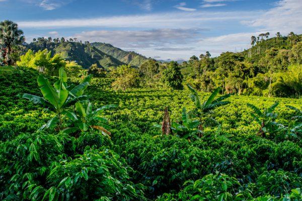 Honduras Coffee Beans 500g