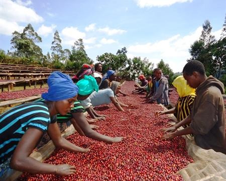Seasonal Blend Ethiopia 500g 1