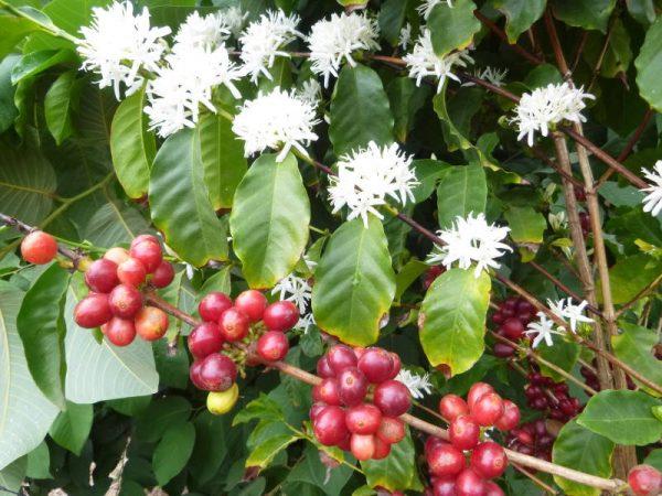 Seasonal Blend Sumatra 4